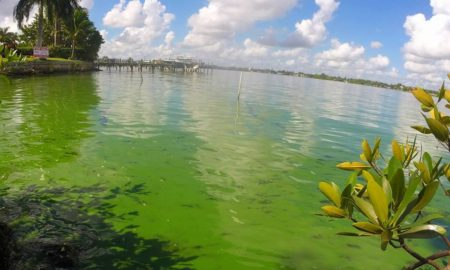 Toxic Green Algae: Awaken State Legislators! State or Federal Someone has got to help!