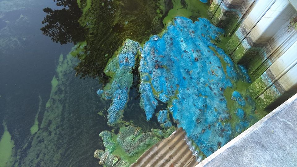 MCSO: Algae is turning Blue