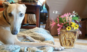 In A Vase on Monday – Brown Greyhounds