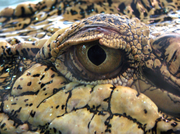 """PAC #5 """"Committee to Protect Florida,"""" Inside the Alligator Pit, SLR/IRL"""