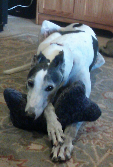 National Adopt A Greyhound Month Ending Soon