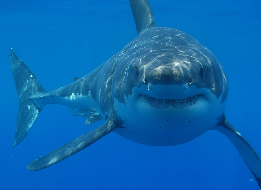 Two more people bitten by sharks in Florida