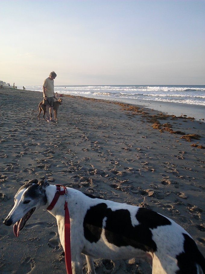 It's National Adopt a Greyhound Month