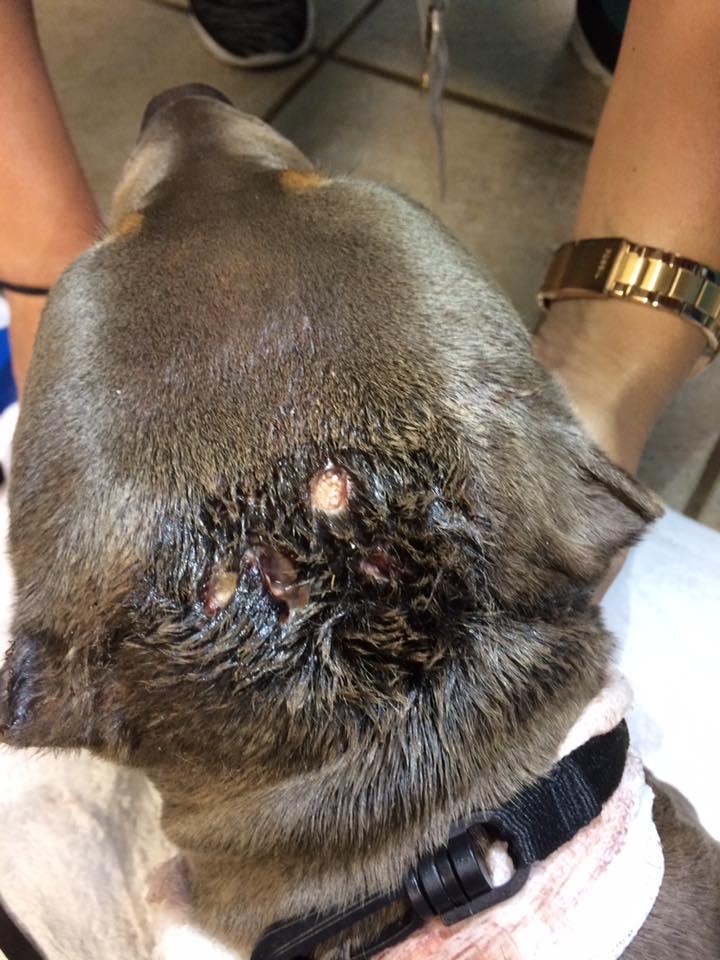PSL: Help needed for injured dog!