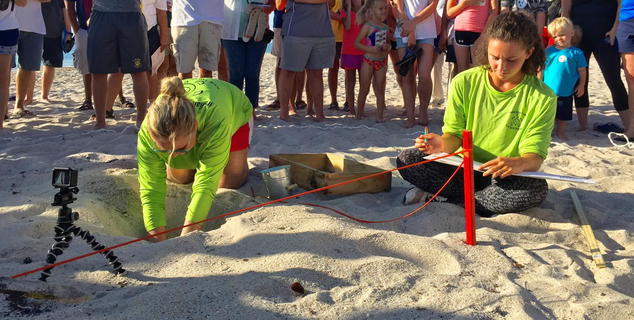 Hatchling saved at IRC Sea turtle nesting digphoto credit; Marlen Hurter