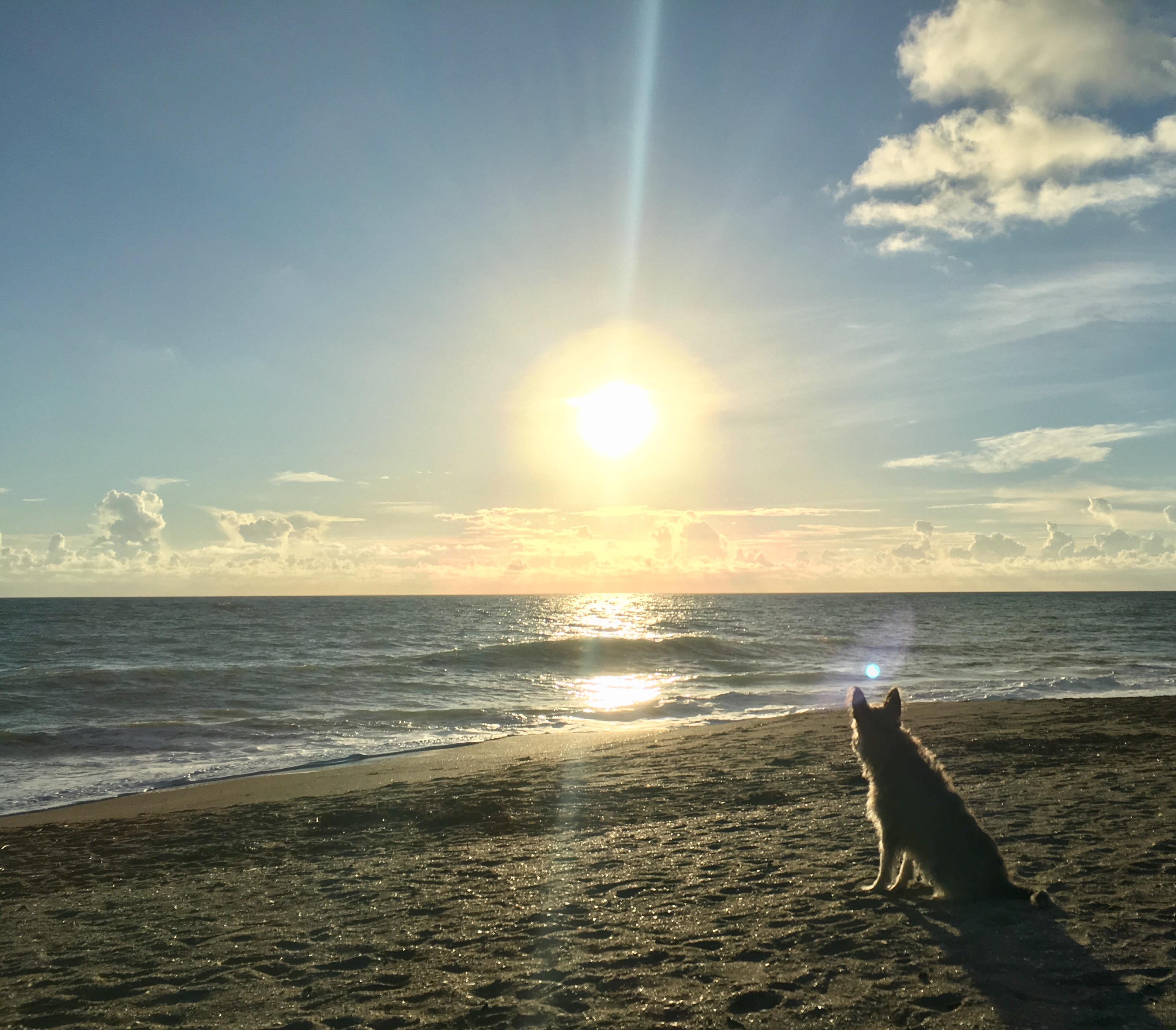 Ft Pierce Dog Friendly Beach Survey