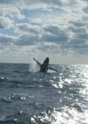 Local captain spots humpback whale off of Stuart