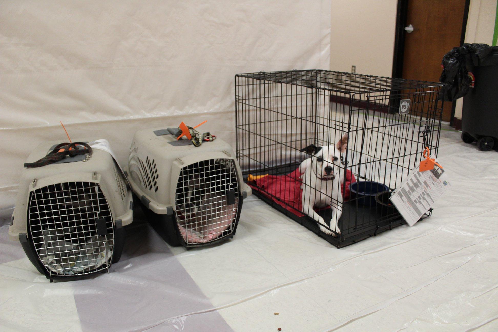 Pre-register pets at St. Lucie Pet Friendly Shelter