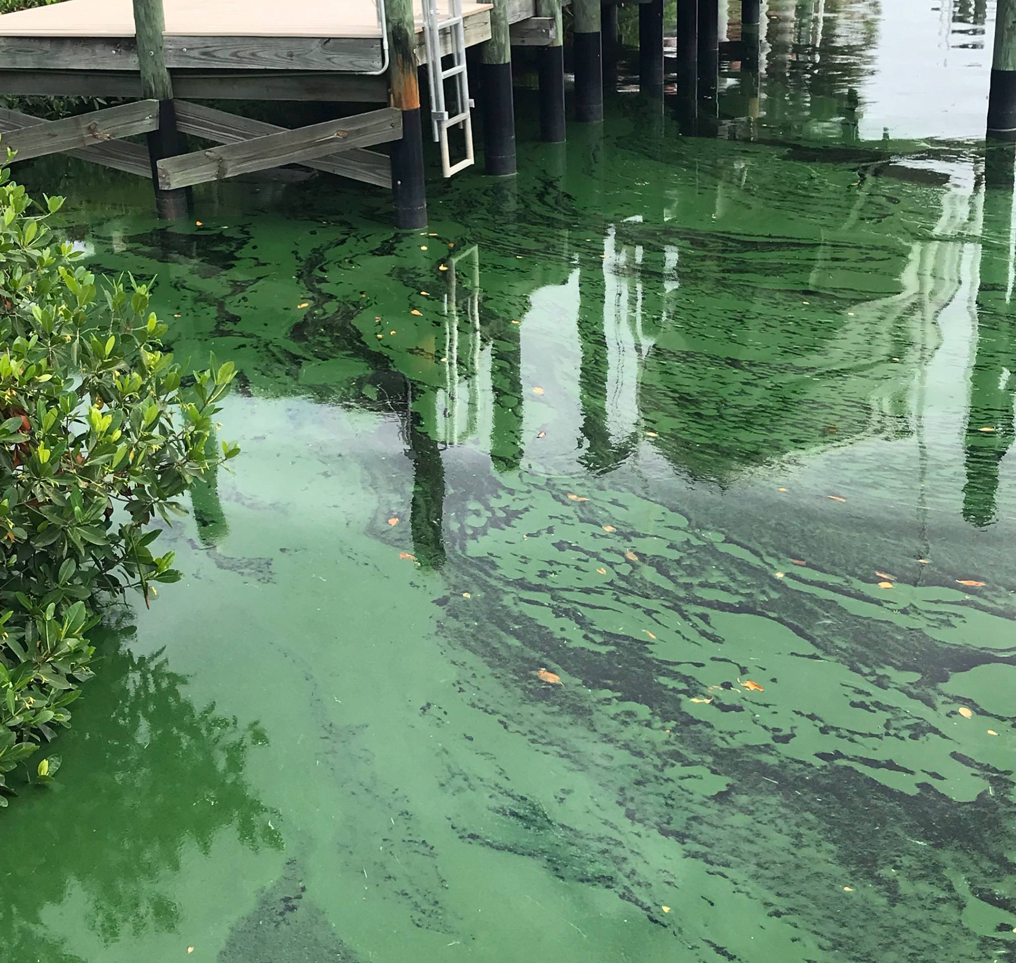 Discharges From Lake O Challenged In Federal Lawsuit