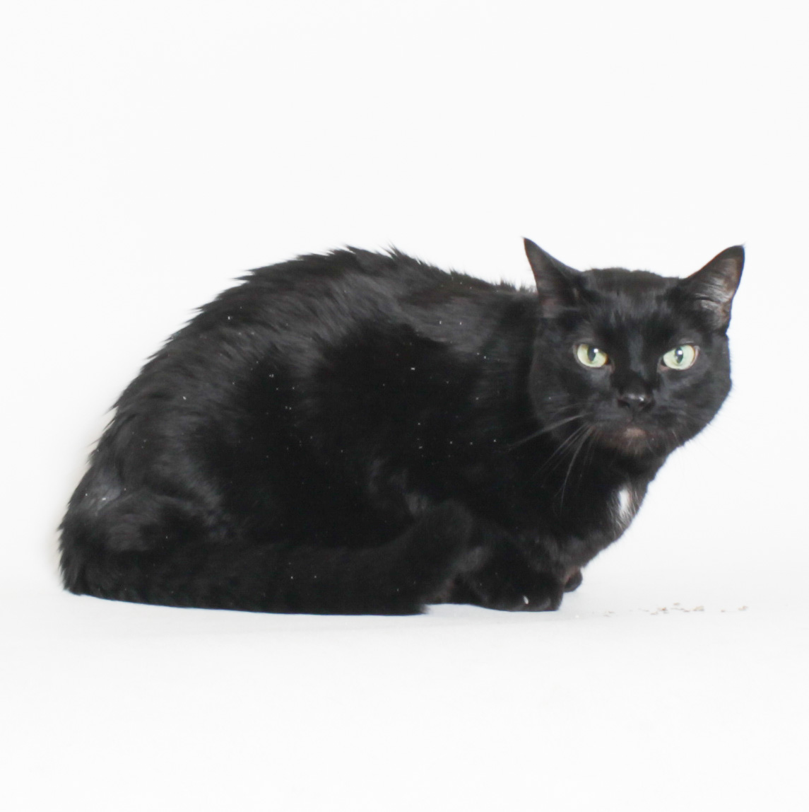 Meow HSTC Pet of the week 10/5/2018
