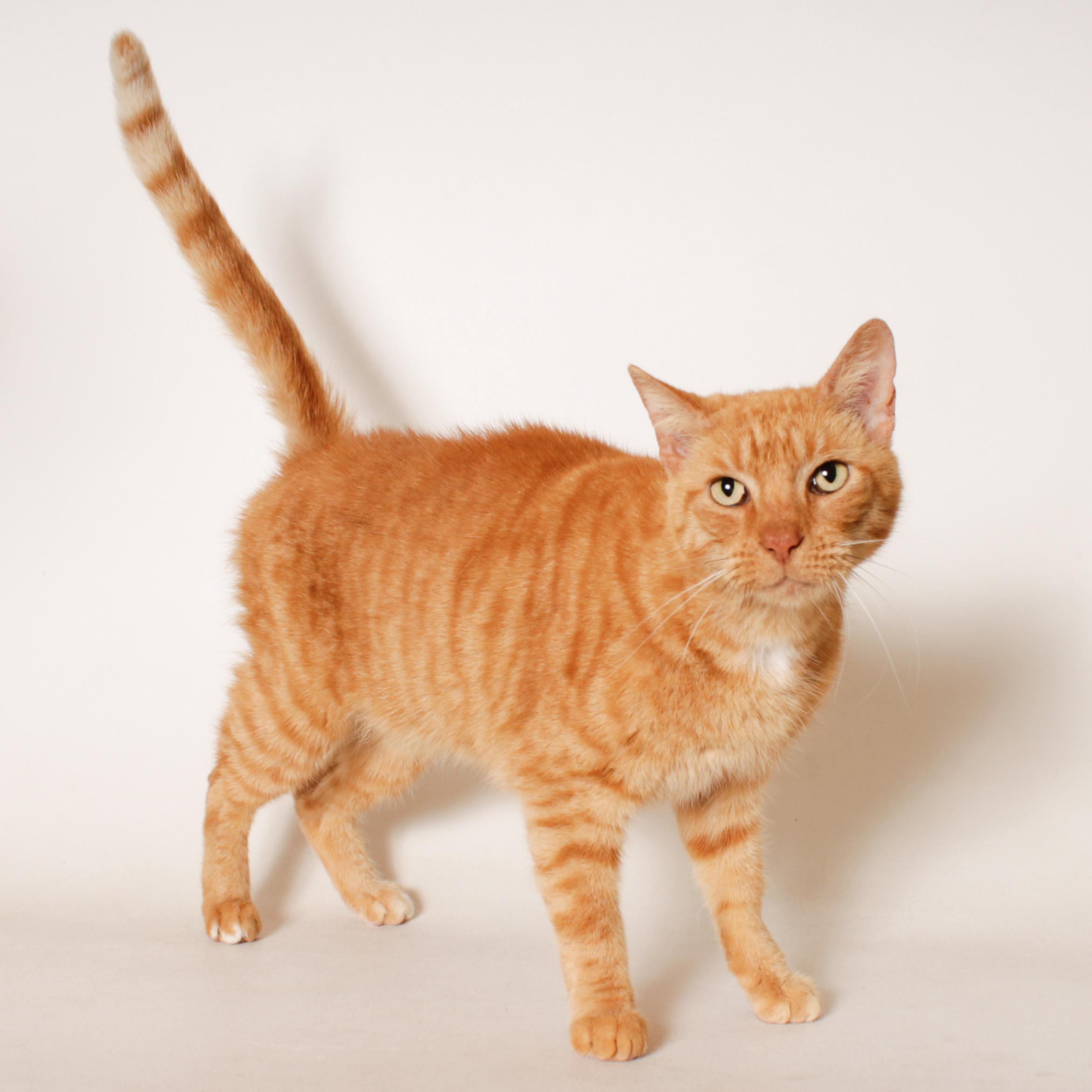Rudy! HSTC Pet of the Week!