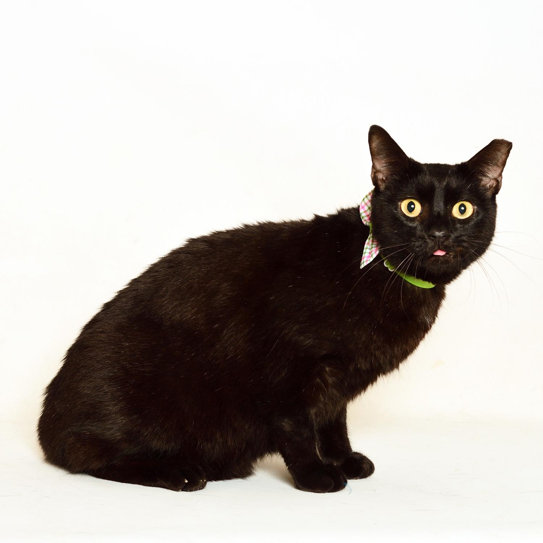 Adopt OBJ! Pet of the week!